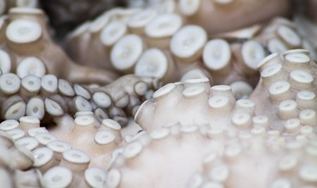 Octopus or mom? Practical advice for moms with more than one child